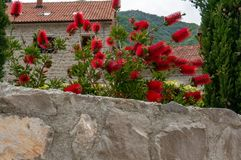 Beautiful mediterranean landscape - town Tivat, Kotor bay Boka Kotorska , Montenegro.  royalty free stock images