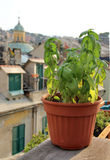Beautiful Mediterranean terrace with flowers Royalty Free Stock Photography