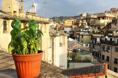 Beautiful Mediterranean terrace with flowers Royalty Free Stock Photo