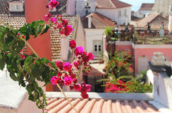 Beautiful Mediterranean terrace with flowers Royalty Free Stock Image
