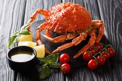 Beautiful boiled spider crab is served with tomato, lemon and me. Beautiful menu boiled spider crab is served with tomato, lemon and melted butter close-up on a stock photo