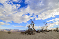 The beautiful Mesquite Flat Dunes Royalty Free Stock Images