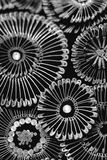 Beautiful metal pattern Stock Image