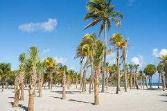 Beautiful Miami Beach Royalty Free Stock Images