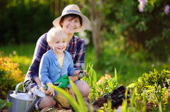 Beautiful middle age woman and her cute grandson planting seedlings in bed in the domestic garden at summer day. Beautiful women and her cute grandson planting Royalty Free Stock Photos