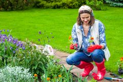 Beautiful middle-aged woman in a flower garden. Is engaged in planting flowers royalty free stock photos