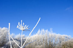 Beautiful midwinter rural landscape with heavy hoarfrost rime Royalty Free Stock Photo