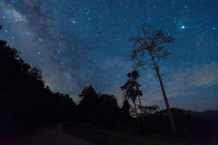 Beautiful milky way galaxy on night sky in the forest park. Thailand royalty free stock images