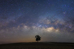 Beautiful milky way with a single treebackground.Landscape with royalty free stock photo