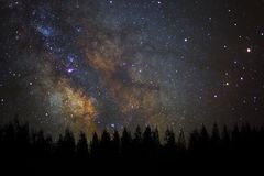 Beautiful milkyway and silhouette of pine tree on a night sky stock photo