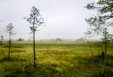 A beautiful mire landscape in Finland Stock Photos