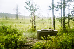 A beautiful mire landscape in Finland Royalty Free Stock Images