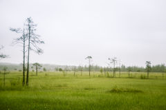 A beautiful mire landscape in Finland - dreamy, foggy look stock photography