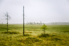 A beautiful mire landscape in Finland - dreamy, foggy look royalty free stock image