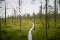 A beautiful mire landscape in Finland - dreamy, foggy look royalty free stock photo