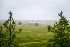 A beautiful mire landscape in Finland - dreamy, foggy look stock image