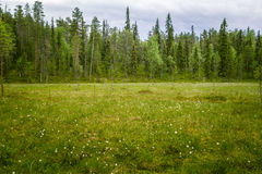 A beautiful mire landscape in Finland - dreamy, foggy look stock images