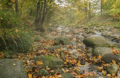 Misty mountain creek Stock Images