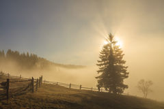 Beautiful Misty Dawn In The Mountains. Carpathian Mountains. Stock Photo