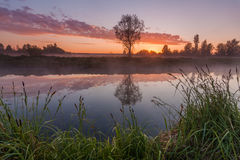 Beautiful misty dawn in the spring on the river Stock Photography