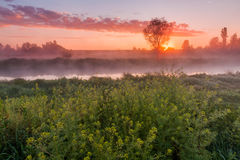 Beautiful misty dawn in the spring on the river Stock Photos