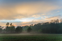 Beautiful misty evening. Beautiful forrest on a misty evening Stock Photo