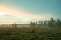 Beautiful misty evening. Meadow on a beautiful misty evening Stock Photos