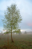 Beautiful misty evening. Beautiful tree on a misty evening Royalty Free Stock Images