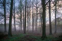 Beautiful misty evening. Trees in a beautiful misty evening Stock Photo