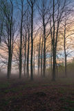Beautiful misty evening. Trees in a beautiful misty evening Royalty Free Stock Photography
