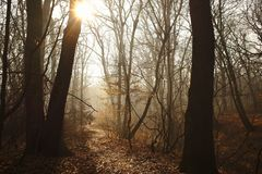 Beautiful misty forest path with sunbeam.  royalty free stock images