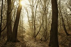 Beautiful misty forest path with sunbeam. HDR image with black gold filter stock photo
