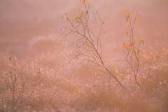 A beautiful misty landscape of a fall in wetlands. Autumn landscape in swamp, soft, diffused light, fog and haze. Sunrise in Latvia, Europe royalty free stock image