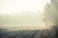A beautiful misty landscape of a fall in wetlands. Autumn landscape in swamp, soft, diffused light, fog and haze. Sunrise in Latvia, Europe stock photos