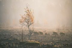 A beautiful misty landscape of a fall in wetlands. Autumn landscape in swamp, soft, diffused light, fog and haze. Sunrise in Latvia, Europe royalty free stock photos