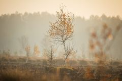 A beautiful misty landscape of a fall in wetlands. Autumn landscape in swamp, soft, diffused light, fog and haze. Sunrise in Latvia, Europe stock images