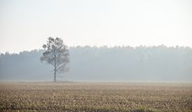 A beautiful misty landscape of a fall in wetlands. Autumn landscape in swamp, soft, diffused light, fog and haze. Sunrise in Latvia, Europe stock photography