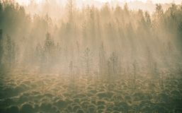 A beautiful misty landscape of a fall in wetlands. Autumn landscape in swamp, soft, diffused light, fog and haze. Sunrise in Latvia, Europe royalty free stock photography