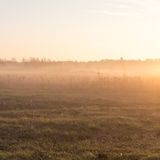 Beautiful misty meadow in the morning frost Royalty Free Stock Image