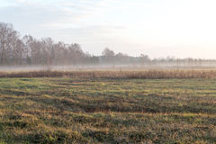 Beautiful misty meadow in the morning frost Stock Image