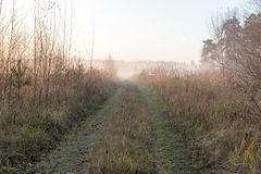 Beautiful misty meadow in the morning frost Stock Photo