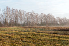 Beautiful misty meadow in the morning frost Stock Photography