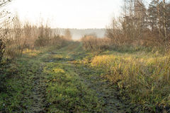 Beautiful misty meadow in the morning frost Royalty Free Stock Photo