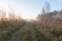 Beautiful misty meadow in the morning frost Royalty Free Stock Photos