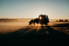 Beautiful misty rural landscape. Dawn light. stock images