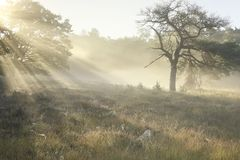 Beautiful misty sunrise on forest meadow royalty free stock images