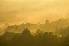 Beautiful misty sunrise on tropical forest mist in Indonesia Stock Photography