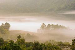 Beautiful misty sunrise on tropical forest mist. Stock Photos