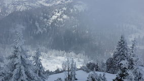 Beautiful misty winter in the mountains and trees Stock Image