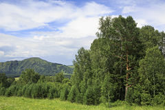 Beautiful mixed forest in Altai Mountains. Royalty Free Stock Photos